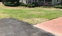 grub lawn damage