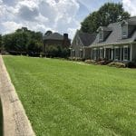 Centipede Grass Lawn