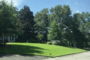 Grass varieties for shade tolerant lawns