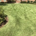 Should I treat my lawn for weeds?