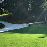 Bermuda Grass Lawn