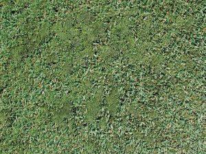 Moss Lawn Care Macon / Georgia