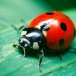 good lawn bugs